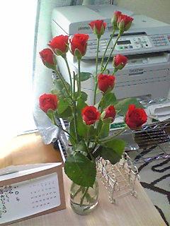 赤い薔薇で
