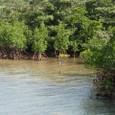 ゲータ川河口